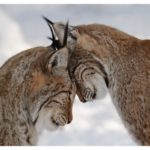 Animal-in-Love-Pictures-5-500x375